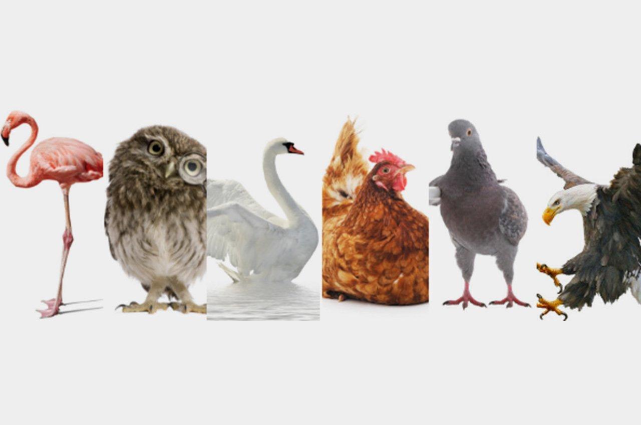 SolutionCreator_Blog_1280x848_birds